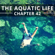 The Aquatic Life